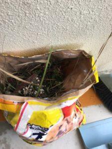台風後に拾った草木