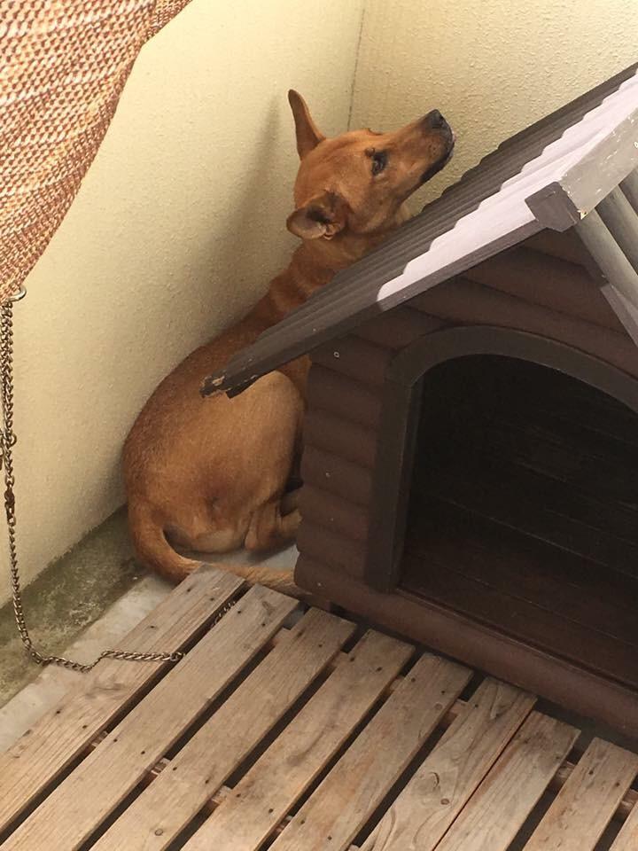 犬史郎と犬小屋