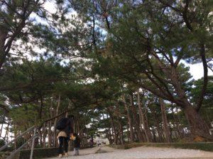座喜味城跡の並木道