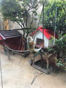 タワーランドの猿