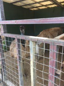 うるま市のミニミニ動物園の大型の鳥