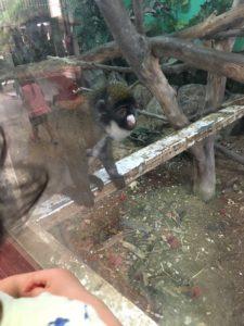 ミニミニ動物園の猿