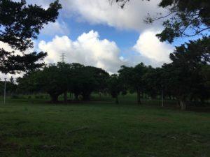 自然豊かな沖縄市の八重島公園