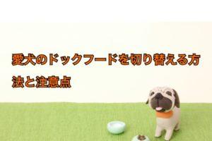 犬のドックフード切り替え方法