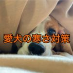 外飼いしている愛犬の寒さ対策