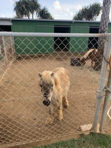 伊計島のホテルの馬