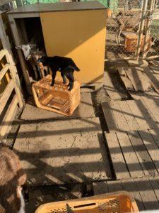 伊計島のホテルで動物と触れ合う