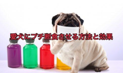 犬の絶食方法