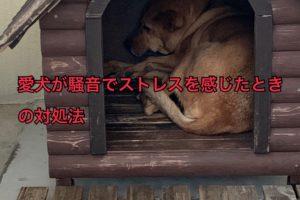 犬が飛行機の音でストレスを感じた時の対処法