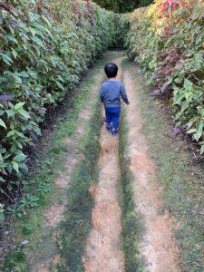 ビオスの丘の迷路