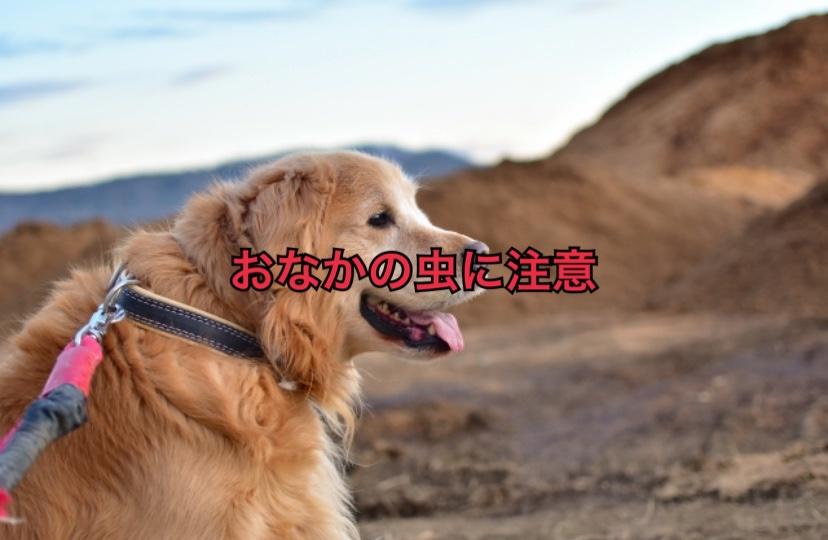 犬に「おなかの虫」が寄生すると危険