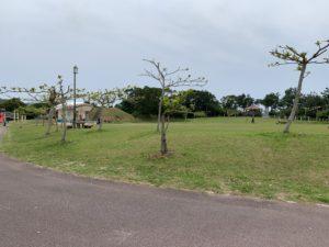 八重岳桜の森公園の広場