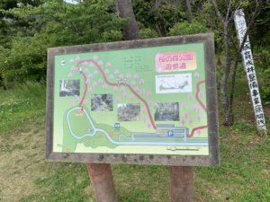 八重岳桜の森公園の遊歩道