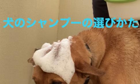 犬のシャンプーの選び方
