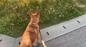 犬史郎の散歩